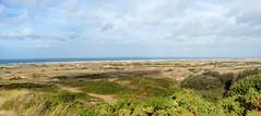 00769 Les dunes d'Hattainville