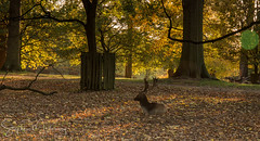 Autumn in Dunham Park
