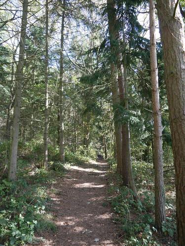 Coppice Corner Woods