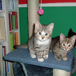 Primary photo for First Day with Flash, Rocket & Piper (07 Jan 2004)