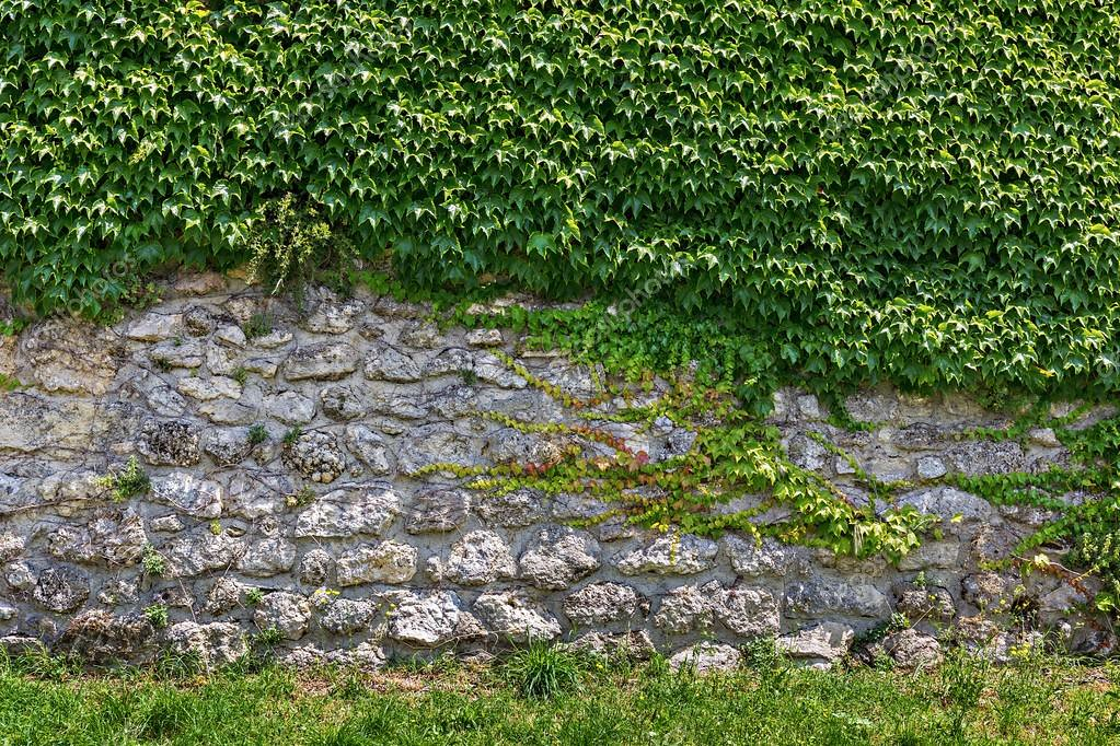 depositphotos_94940656-stock-photo-stone-wall-with-ivy