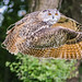 Eagle Owl In Flight (3) by Mike Atkinson Photography