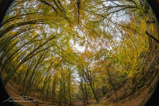 Herbstwald 181104