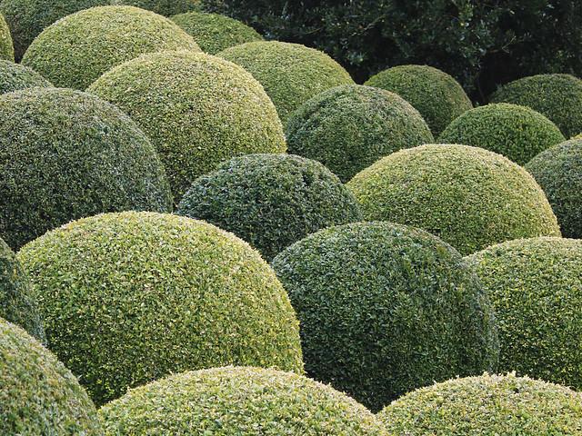 Garden of Amboise