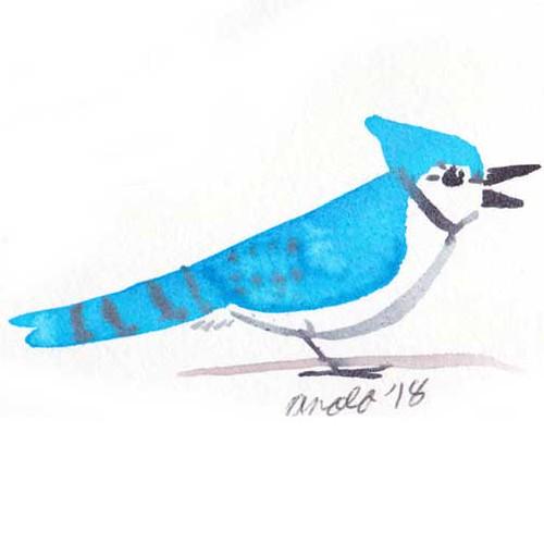 10.12.18 - Little Brushy Blue Jay