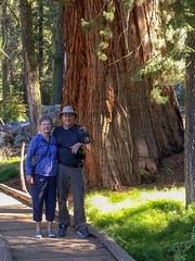 Big Trees Trail, Sequoia National Park