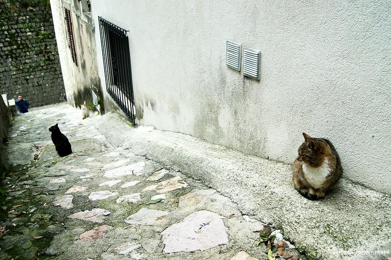 Коты возле Южных ворот