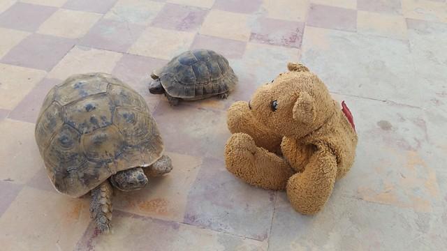 11 Friendly Tortoises