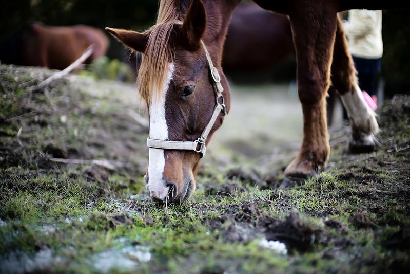 dear horse