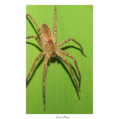 Spider  -September 2018