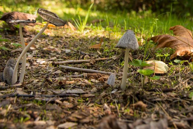 Sunshine Coast Mushroom Festival
