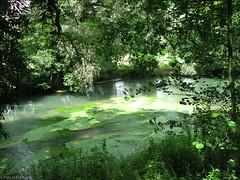 Vert, Hesdin - Photo of Grigny