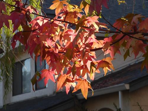 2018-10-23 - Fall Color Change, Set 5