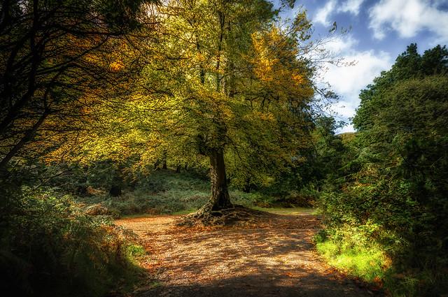 Autumn gold ...