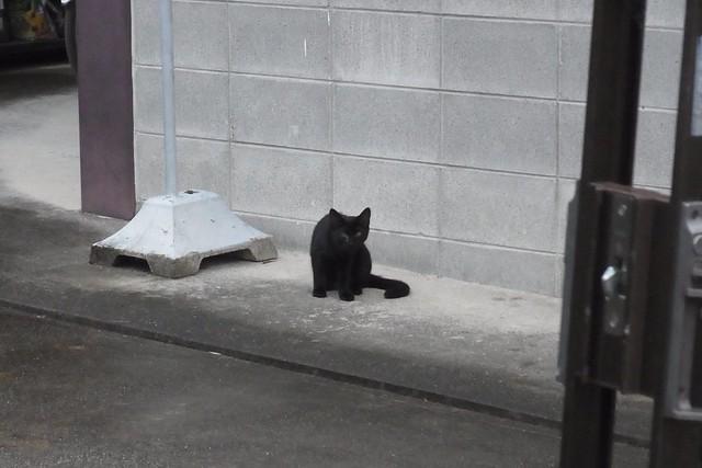 Today's Cat@2018-10-27