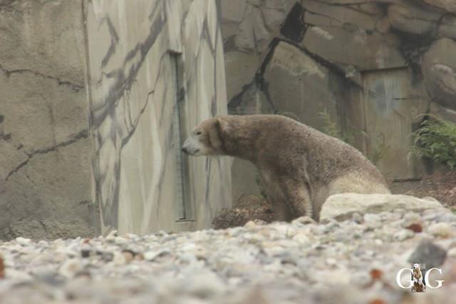 Besuch Zoo Rostock 20.10.201847