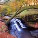 Roddlesworth Woods Waterfall