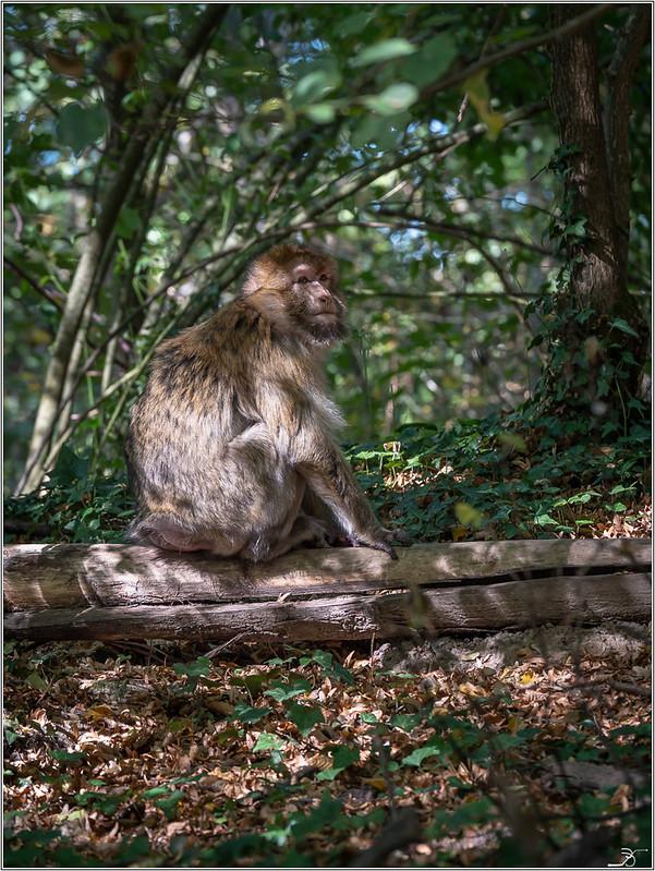 Terre des singes part3 43192241900_32e2c51401_c