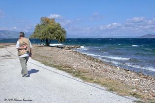 Varnavas beach, in North-East Attica