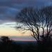 Tree at Nightfall