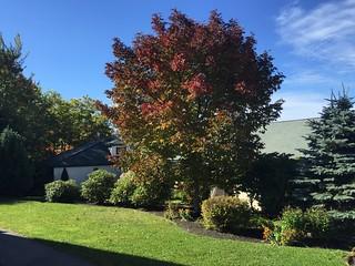 Foliage at Lark Lodge