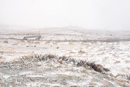Sneeuwstorm - Blizzard