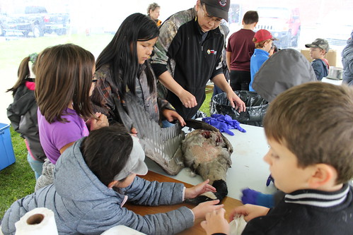 <p>Students at Fall Harvest learning how to prepare wild goose for cooking</p>
