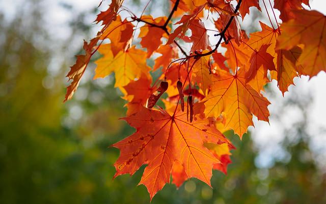 Colors of autumn, Olympus E-M10 Mark III, Sigma 60mm F2.8 DN   A