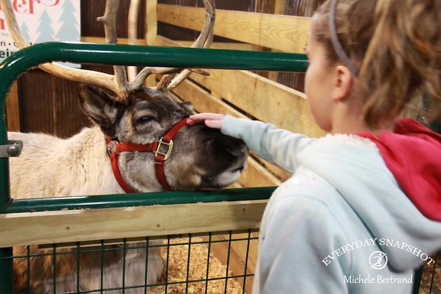 Reindeer 08