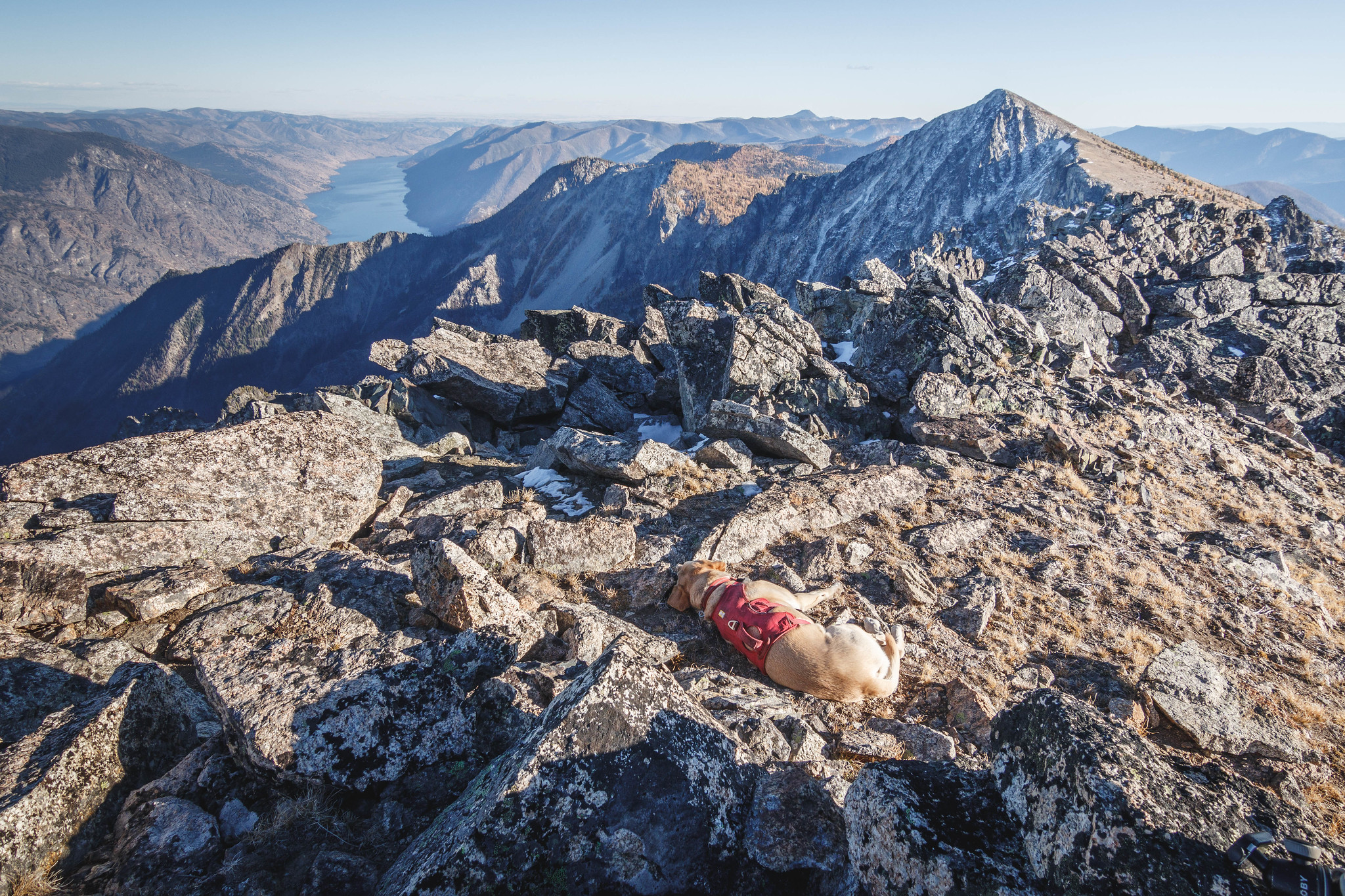 Summit dogs on Squaretop Mountain