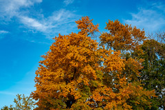 Fall Colors are Finally Coming to Rockville