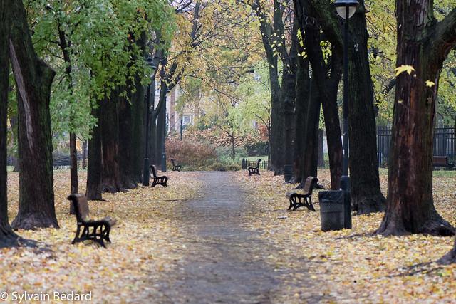 Parc Sir-Wilfrid-Laurier l'automne, Nikon D7200, AF-S VR Micro-Nikkor 105mm f/2.8G IF-ED