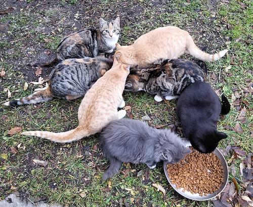 20181031.7cats
