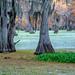 Swamp Greens