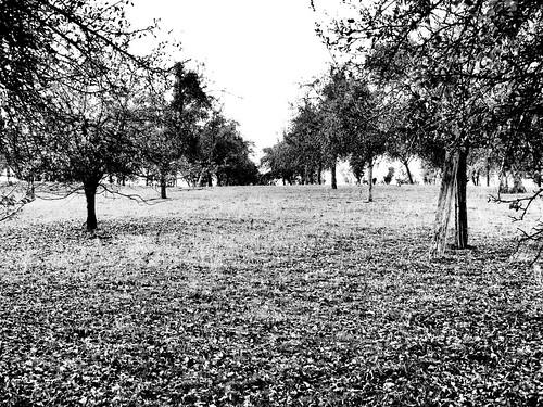 The orchard (buckaroos70)