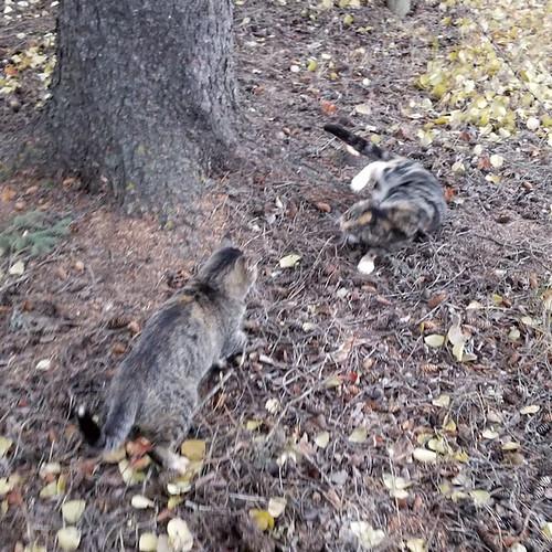 20181026.catfight3