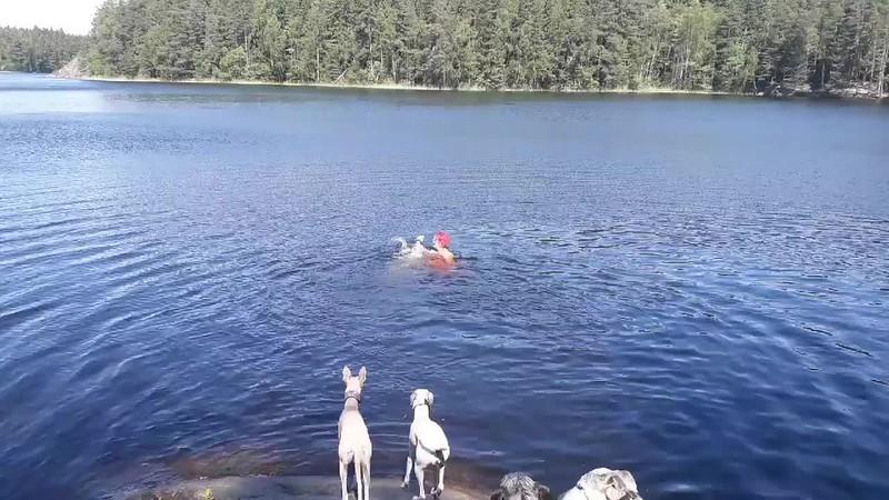 GaiaSchwimmen