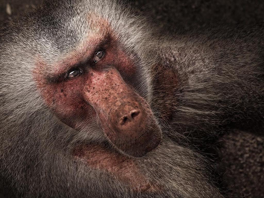FA09 FA17 jomabesa (España) - Primer Plano - Tomada en Zoologico de Madrid el 16-03-12