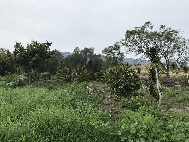 Puuwaawaa Bio-Cultural Blitz 2018