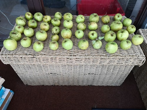 Apples I picked this morning