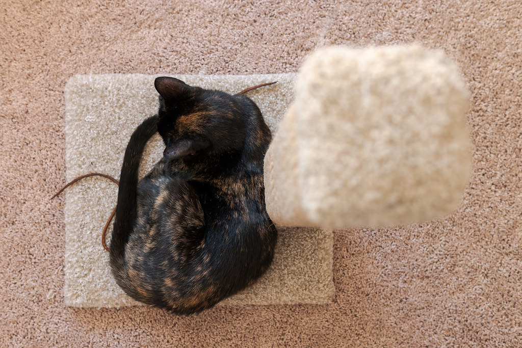 Our tortoiseshell cat Trixie sleeps on the base of the carpeted scratching post