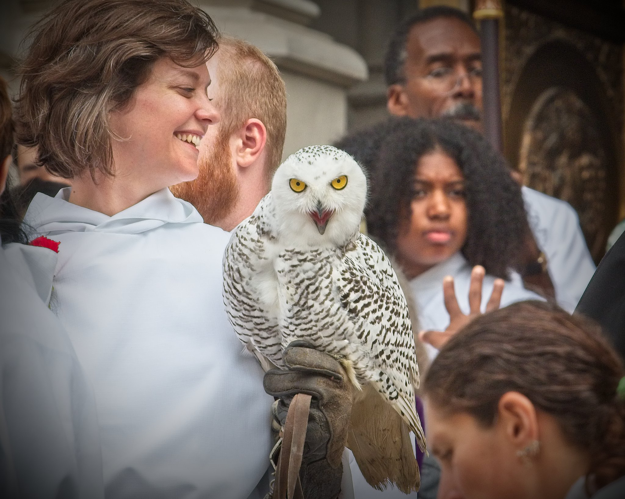 Blessing of the snowy owl