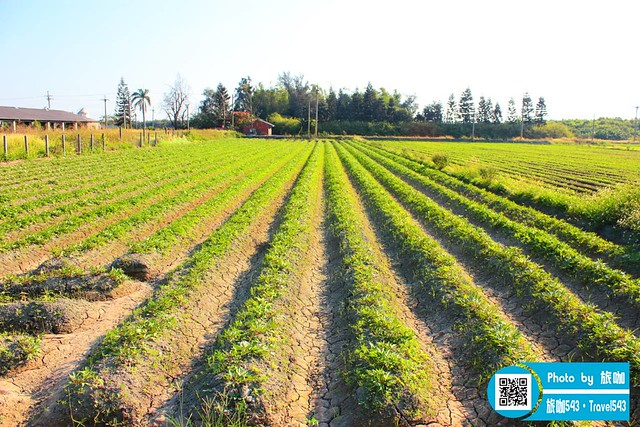 田畦邊果菜園