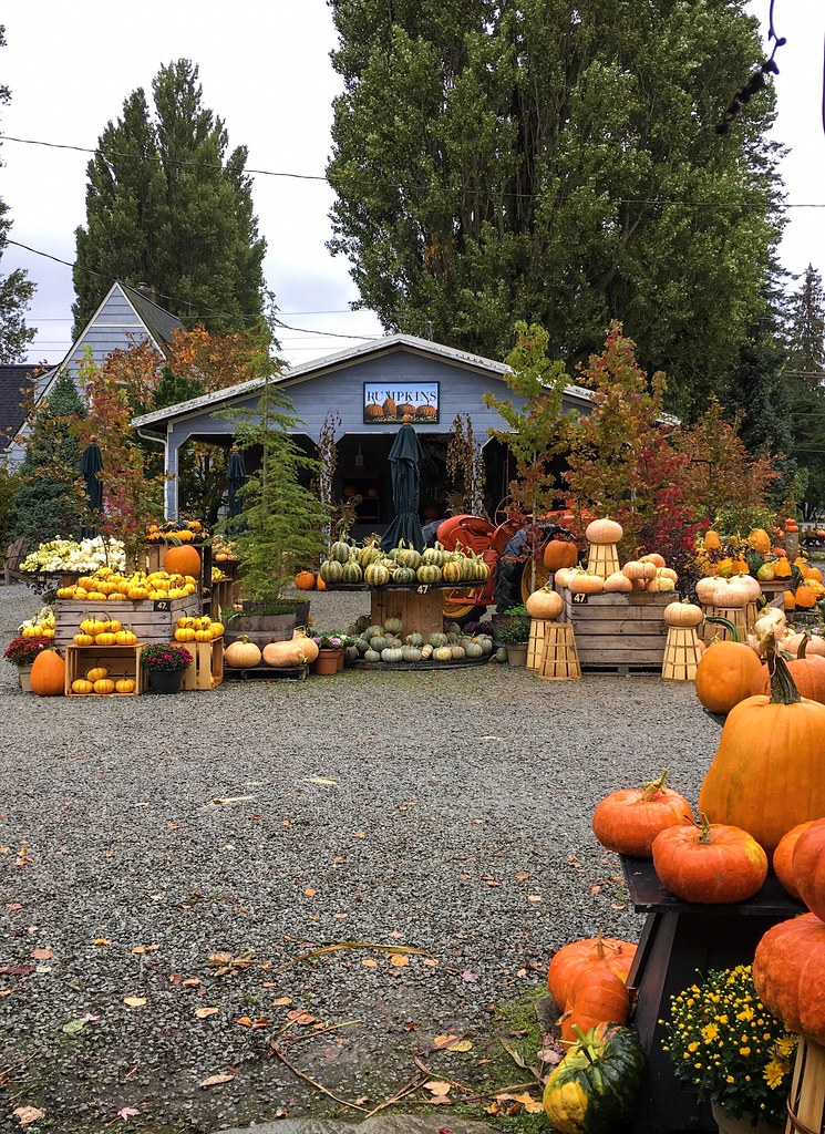 Beautiful pumpkins at Gordon Skagit Farms