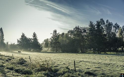 On a Sunday morning foggy