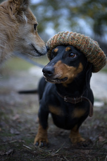 Every dog needs a hat in autumn :)