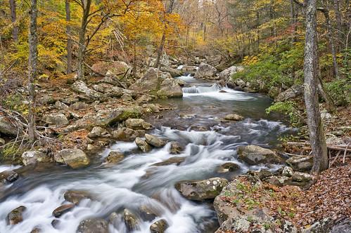 20181111_114b TN McGill Creek, Cumberland Trail