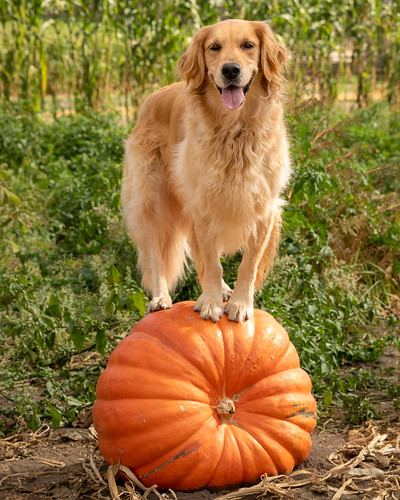 Abigail Picks Her Favorite Pumpkin