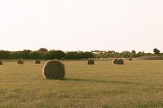 Natural Grass Rolls ...