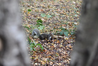 Sneaky Squirrel Shot